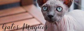 los gatos y el esoterismo