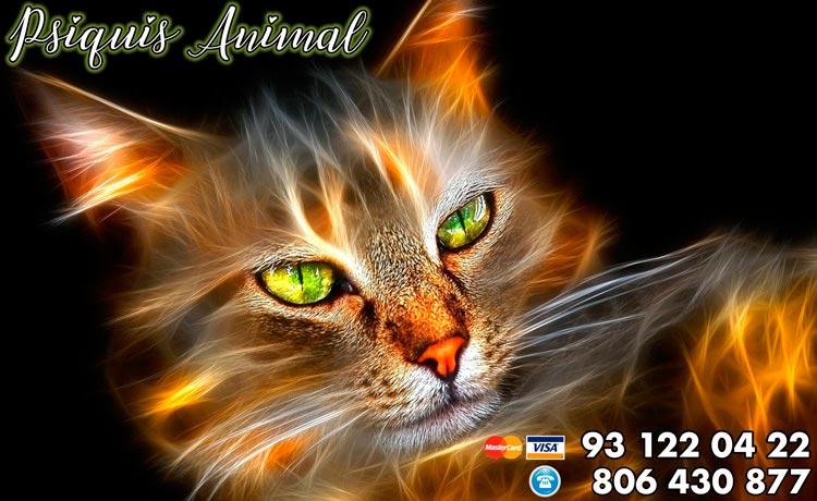 Psiquis animal - cuando los animales predicen el futuro