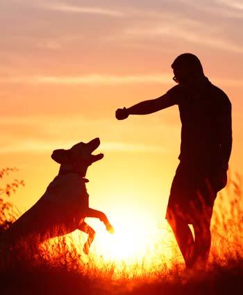 la psiquis del perro - poderes de los animales